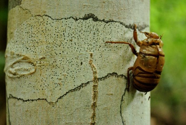 Bug on a Tree