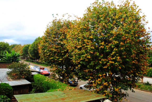 Fall in Antsirabe
