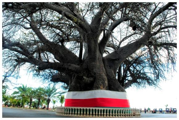 Mahajunga baobab(1)
