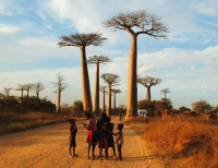 Photo-Frenzied in Morondava's Avenue de Baobabs