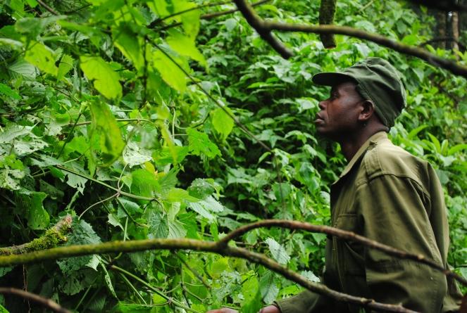 Gorilla Tracker