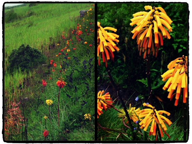 Flower Collage Simiens